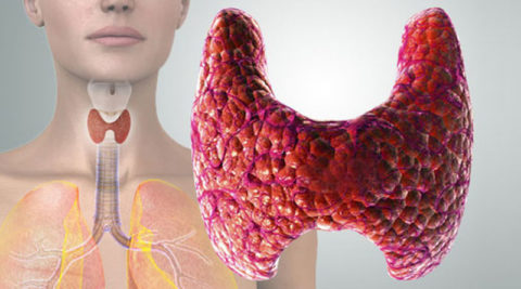 Для определения состояния щитовидной железы требуется назначение спектра анализов