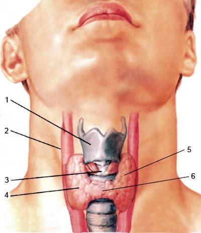 Фото: Патология щитовидной железы