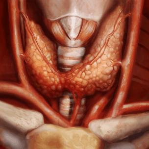 Фото щитовидной железы