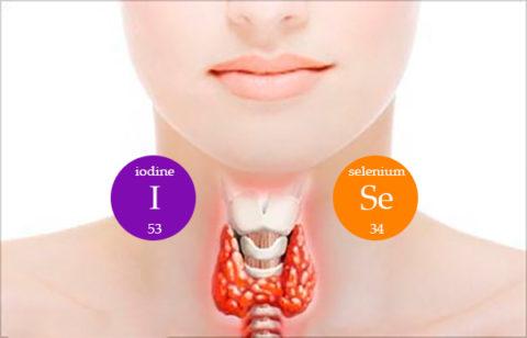 Продукты при щитовидке: диета при заболеваниях