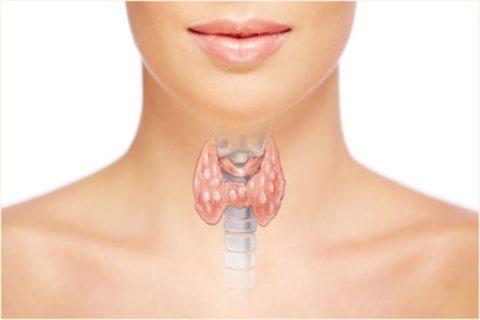 Норма анализа на свободный Т4 – один из главных показателей здоровья щитовидной железы