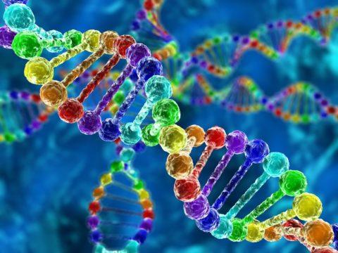 Основная причина зоба Хашимото – «поломка» в цепочке ДНК