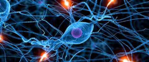 Увеличенное фото нейронов под микроскопом