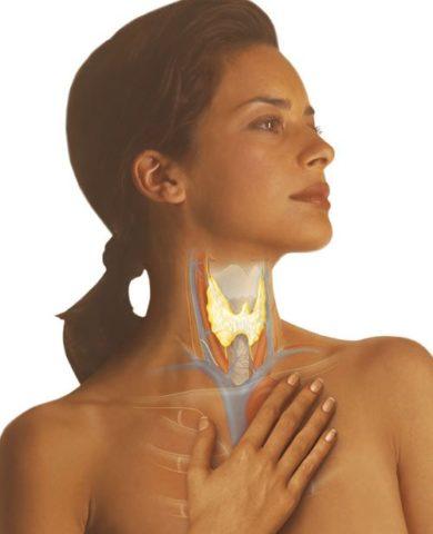 Заболевания щитовидной железы часто становятся причиной изменения общего гормонального фона