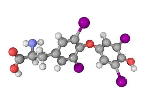 Что такое тироксин: гормон острого ума и стройной фигуры