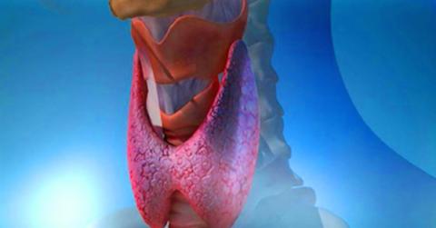Важно беречь здоровье щитовидной железы