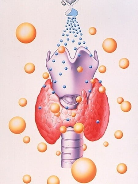 Молекулы йода необходимы для нормальной работы щитовидной железы