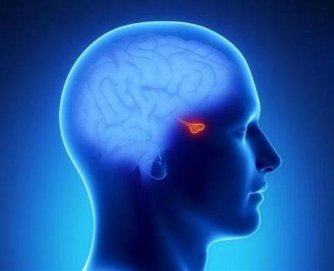 Диагностировать гипофизарный гипотиреоз своими руками не нужно, это под силу только специалистам