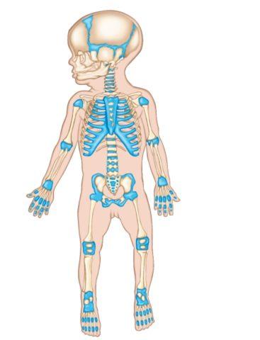 Кальцитонин насыщает кальцием кости и способствует их росту