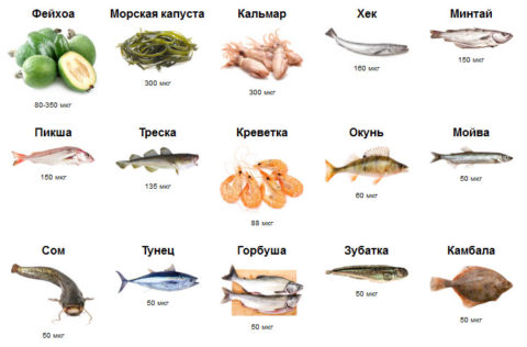 На фото – основные пищевые источники йода