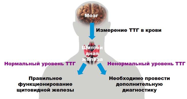 Низкий tsh народная медицина ангиограф аппараты
