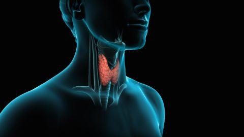 Видео в этой статье посвящено щитовидной железе.