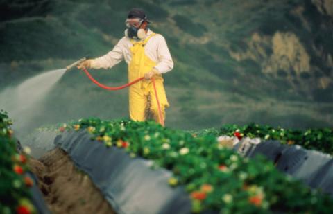 Европейские технологии овощеводства, — красивый внешний вид + разрушающее воздействие на организм