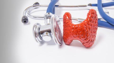 Модель щитовидной железы.