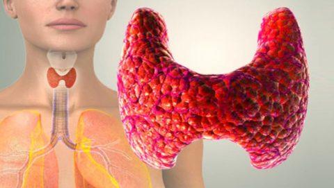 Неоднородная эхоструктура щитовидной железы является признаком патологических изменений