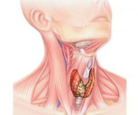 При некоторых патологиях в щитовидной железе могут образовываться узлы