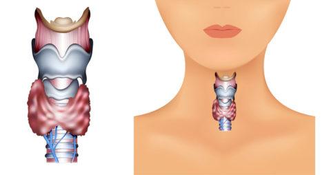 Уменьшение щитовидной железы – причины могут быть как внутренними, так и внешними