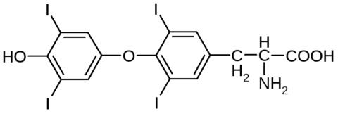 Химическая структура тироксина