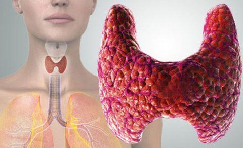 Щитовидка – орган, принимающий участие в важнейших процессах.