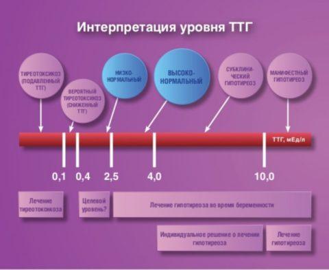 Интерпретация результатов анализов на тиреотропные гормоны