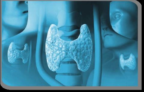 Исследование позволяет оценить характер функционирования щитовидки.