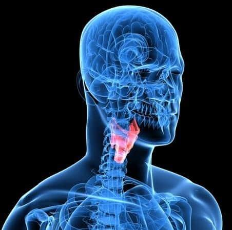 Щитовидка – «сердце» эндокринной системы.