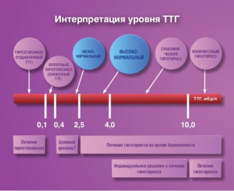 Интерпретация уровня тиреотопина