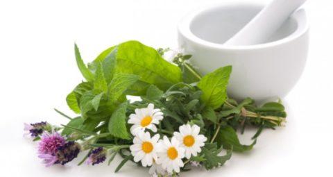 Применение лекарственных трав – эффективный метод лечения щитовидной железы.