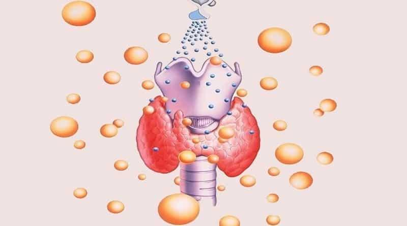 Рецепторы к тироксину есть у каждой клетки человеческого организма