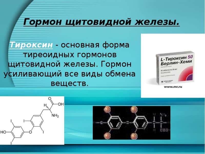 Фото. Тироксин обеспечивает метаболизм во всех органах и тканях