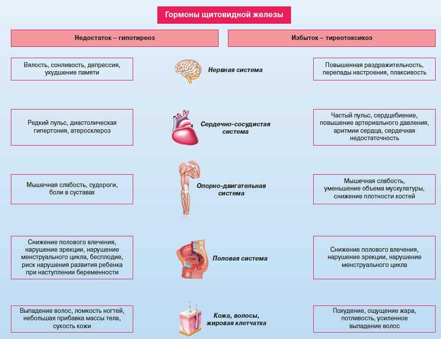 Влияние гормонов щитовидной железы