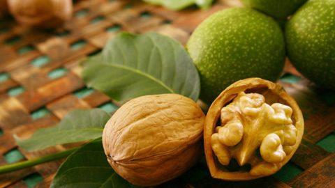 Для приготовления лечебных средств можно использовать любые части грецких орехов.