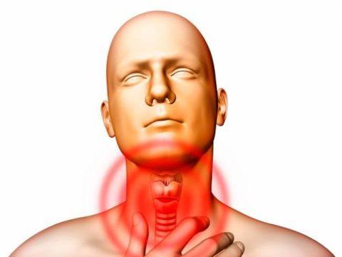 У мужчин есть щитовидная железа. Анатомические и физиологические особенности