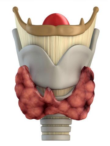 Схематическое изображение щитовидной железы