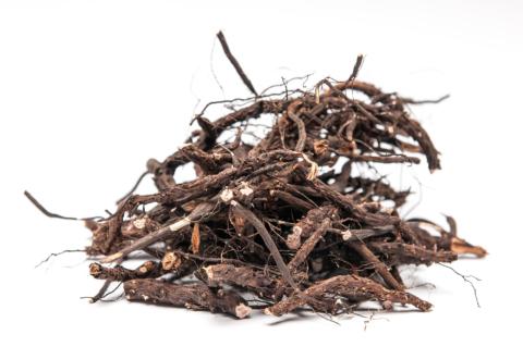 Свежие корни лапчатки для приготовления настойки на дому для лечения эндокринологии у пациента.