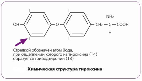 Т4 отличается от трийодтиронина наличием дополнительного, четвертого атома йода
