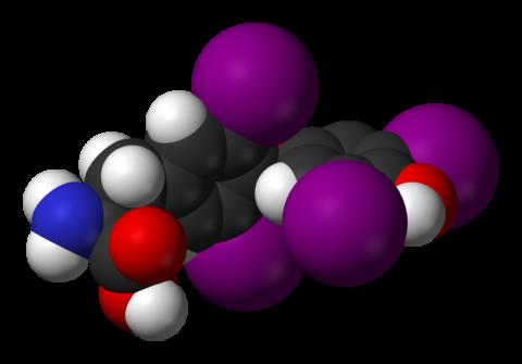 Тироксин содержит четыре молекулы йода