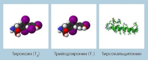 Третий гормон ЩЖ получил название тиреокальцитонин