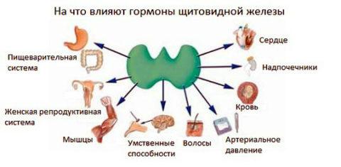 В основном именно Т3 производит основные биологические эффекты органа