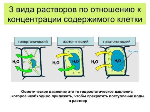 Воздействие различной концентрации раствора поваренной соли на живые клетки