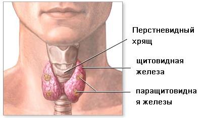 Заболевание щж
