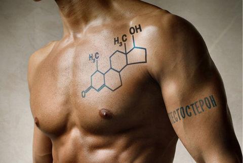 Основной андроген — тестостерон