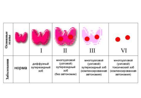 Размеры щитовидной железы