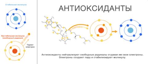 Источник антиоксидантов
