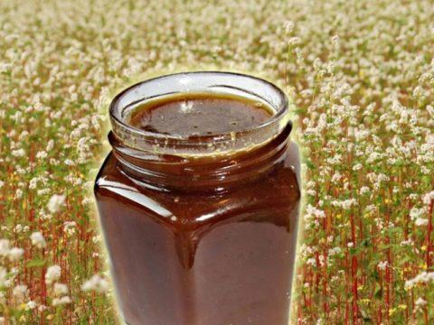 Гречка и мед, собранный с ее цветков помогают бороться с заболеваниями щитовидной железы