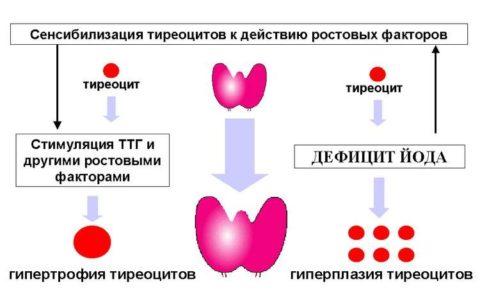 Механизм появления эндемического зоба
