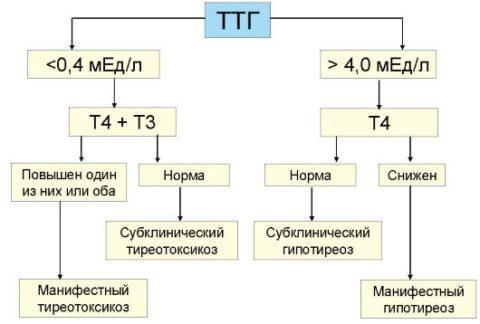 Схема гормональный соотношений при постановке диагноза