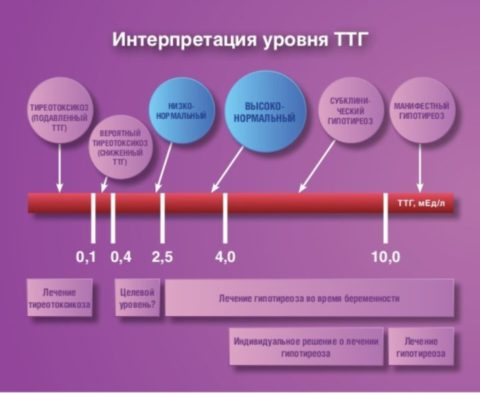 Что нужно знать о ТТГ при гипотиреозе